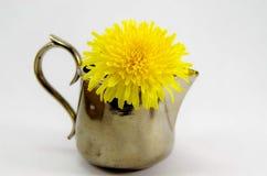 在花瓶的蒲公英 图库摄影