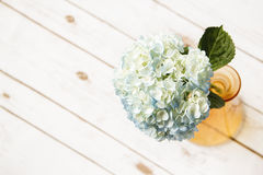 在花瓶的蓝色八仙花属 图库摄影