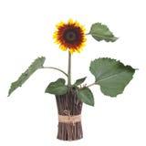 在花瓶的装饰向日葵由木枝杈制成 免版税图库摄影