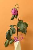 在花瓶的退色的玫瑰色花 免版税库存照片