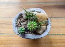 在花瓶的仙人掌绿色家庭 免版税库存照片