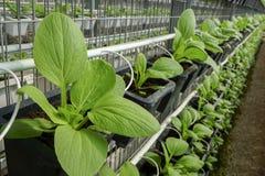在花瓶的Eco菜 免版税库存照片