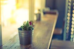 在花瓶装饰的仙人掌在木桌(被过滤的图象proces上 库存图片