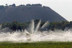 在花生领域的灌溉喷水隆头 图库摄影