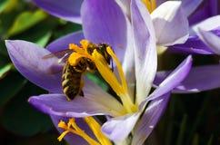 在花的一个小黄蜂 免版税图库摄影