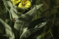 在花的一个臭虫 免版税图库摄影