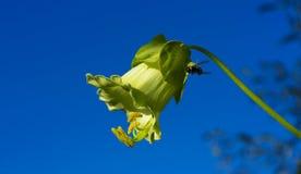 在花的一个黄蜂 免版税库存照片