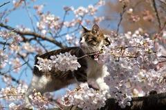 在花的一只猫 免版税库存照片