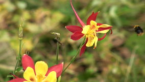 在花的一只蜂 影视素材