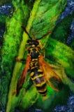 绘在花的一只蜂 库存图片