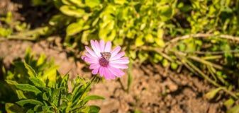 在花的一只蝴蝶 库存照片