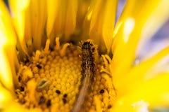 在花的一只蠕虫 库存照片