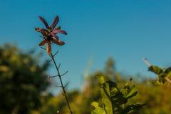 在花的一朵花 免版税库存图片