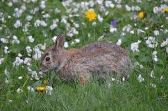 在花的兔子 免版税库存照片
