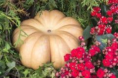 在花的南瓜在秋天收获节日 背景,菜 库存照片