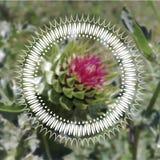 在花的圆的装饰品样式 库存照片