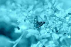 在花的夜蝴蝶 免版税库存图片