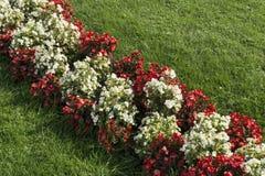 在花的奥地利旗子 免版税库存图片