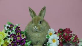 在花的小兔 股票录像