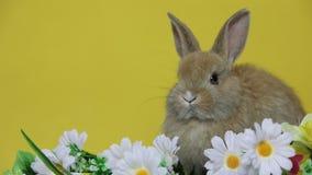 在花的小兔 影视素材