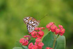 在花的惊人的蝴蝶 免版税库存图片