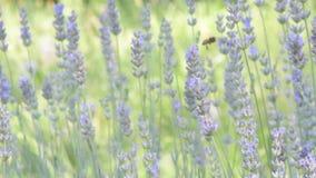 在花的昆虫