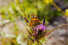 在花的昆虫 免版税库存图片