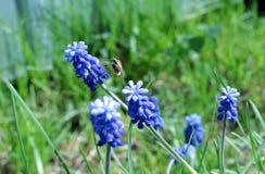 在花的昆虫 库存照片