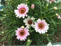 在花的春天 库存图片