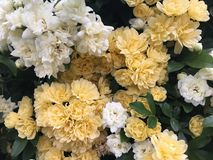 在花的春天 图库摄影