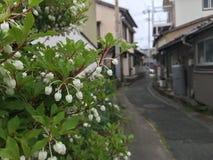 在花的春天 库存照片