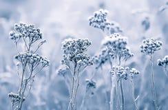 在花的树冰在冬天领域 库存图片