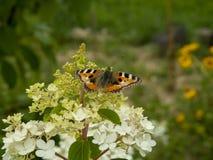 在花的橙色蝴蝶 免版税库存图片
