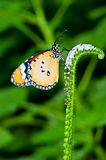 在花的橙色蝴蝶 免版税图库摄影