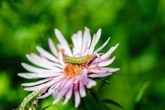 在花的毛虫 免版税库存照片