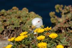在花的海鸥 库存图片