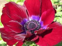 在花的爱 库存照片