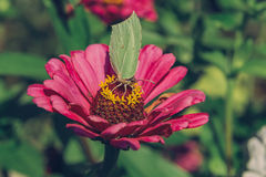 在花的特写镜头蝴蝶 库存图片