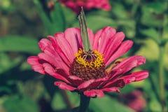 在花的特写镜头蝴蝶 免版税库存照片