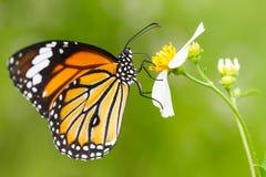 在花的特写镜头蝴蝶 免版税图库摄影