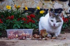 在花的猫 免版税库存图片