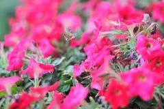 在花的甲虫在春天 免版税库存照片