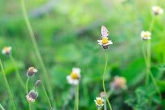 在花的空白蝴蝶 库存照片