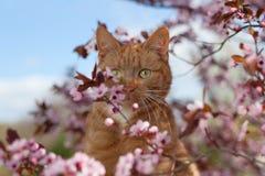 在花的红色猫 库存图片