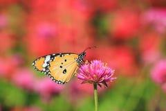 在花的美丽的蝴蝶在自然本底 免版税库存图片