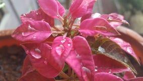 在花的美好的小滴在Simegn拍的大雨令人惊讶的照片以后 图库摄影