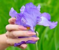 在花的背景的美好的修指甲 免版税库存图片