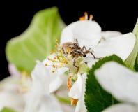 在花的臭虫 免版税库存图片