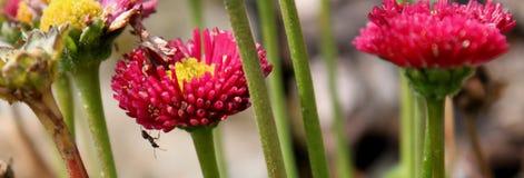 在花的蚂蚁 免版税库存图片