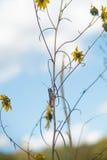 在花的蚂蚱 免版税图库摄影
